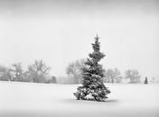 Winter 19