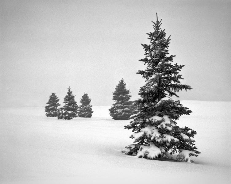Winter 6