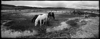 Horses at Potts Ranch