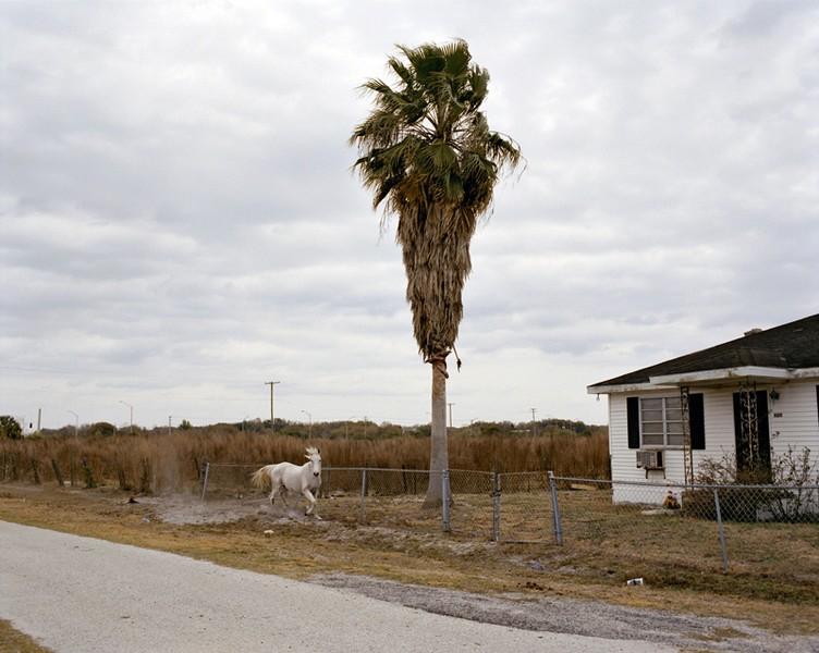 White Horse, Riverview, Florida