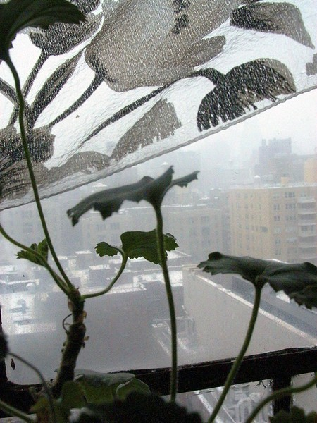 Plant and curtains