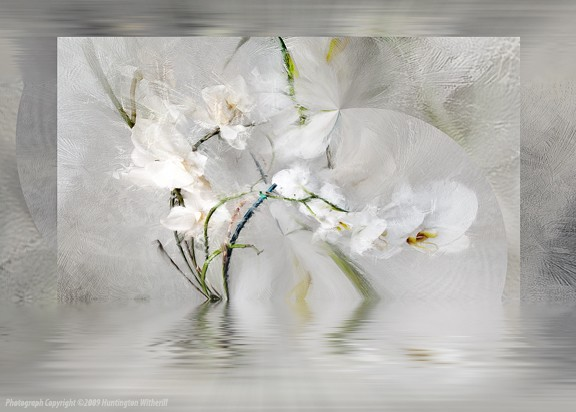 90203 • Orchid #16, 2009