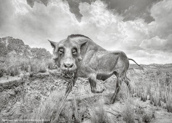 01393 • Prehistoric Wild Boar (Daeodon) CO, 2010