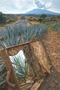 The Tequila´s road ©
