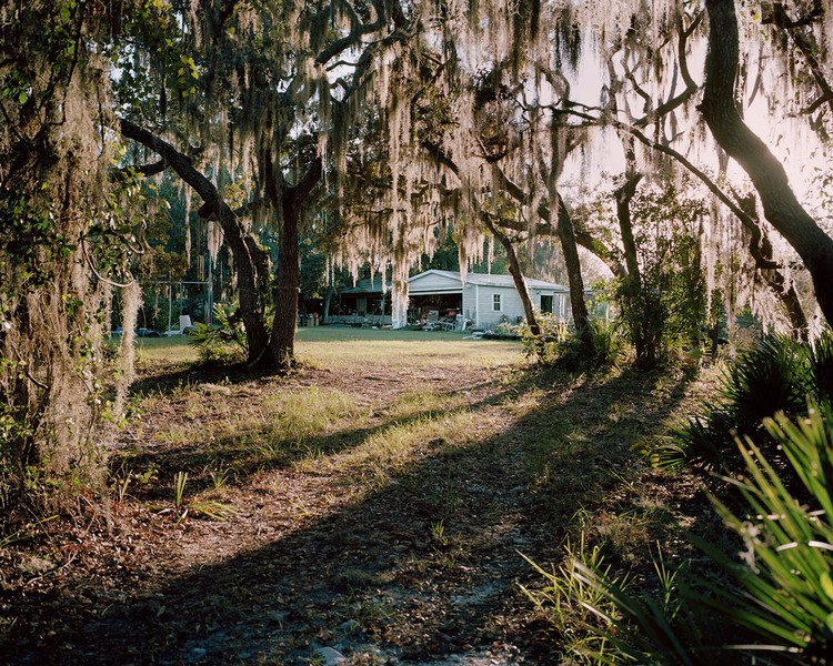 Long Shadows and Spanish Moss