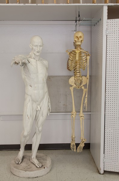 The Anatomy Man and Skeleton, Boise State Univ...
