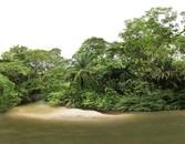 River Jungle