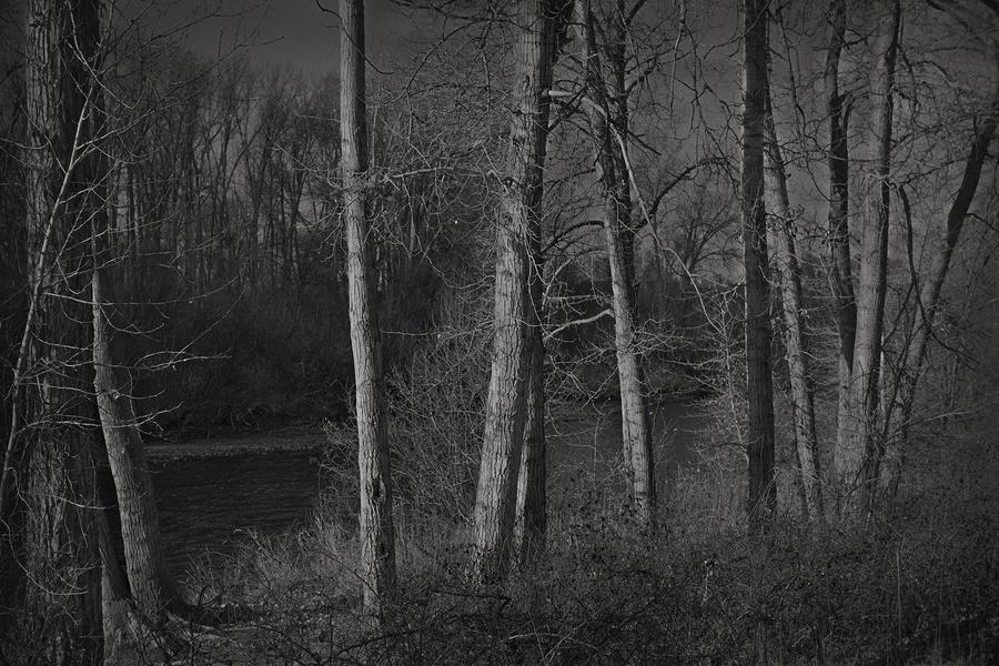 Along the River No. 13