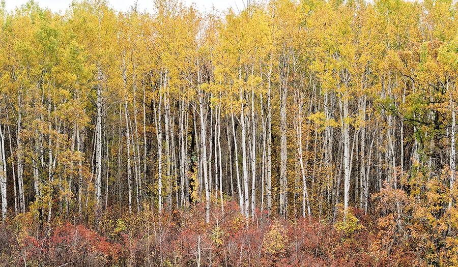 Autumn (4), Nutimik Lake, Manitoba