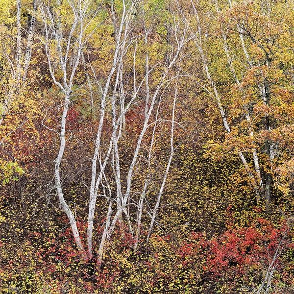 Autumn (5), Nutimik Lake, Manitoba