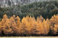Autumn (8), Brébeuf, Quebec