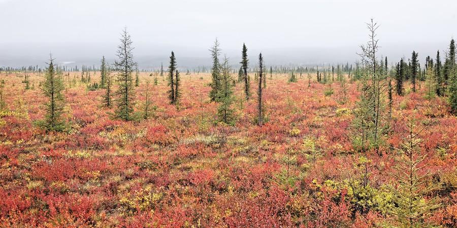 Autumn (3), near Inuvik, Northwest Terr