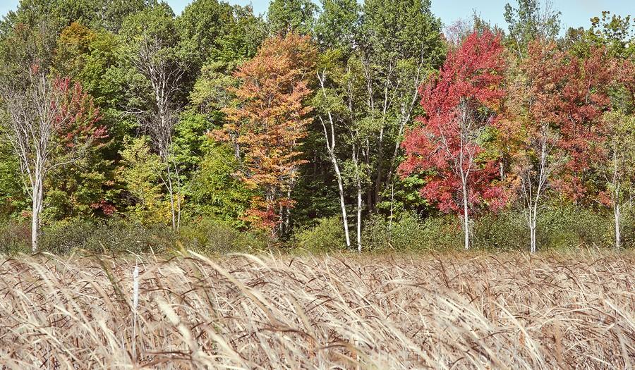 Autumn (7), Ottawa, Ontario
