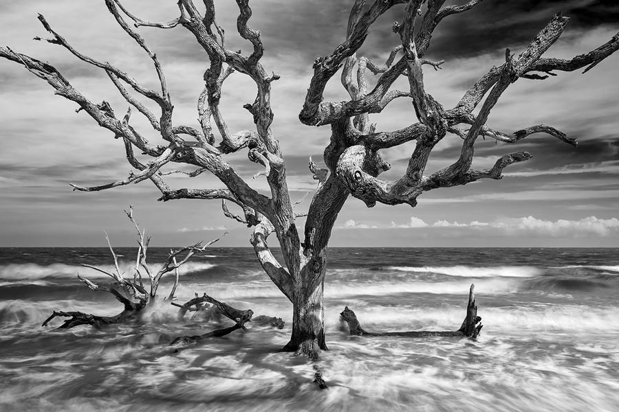 Driftwood Beach, Jekyl Island, Georgia