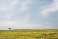 Grassland, near Bazaar, Kansas