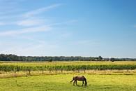 Horse, Conestogo, Ontario