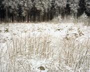 Hurtgen Forest 1944, Wilde Sau, 2010