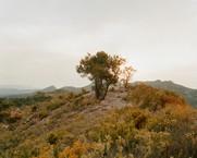 The Ebro 1938, Hill 481, 2006