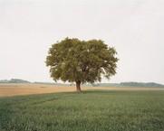 Poitiers 732, Moussais-la Bataille, 2002