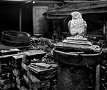 Still Life w/Owl