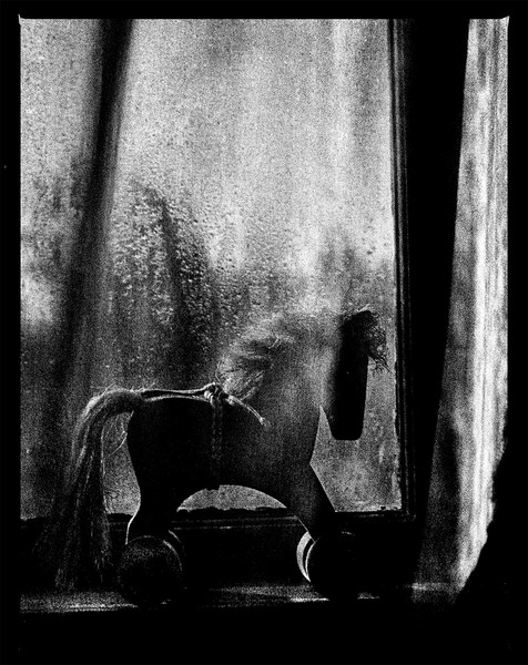 Horse in a Window