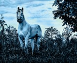 Blue Horse Dream