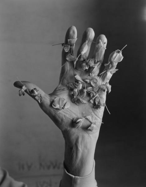 Wisteria Hand, 2016