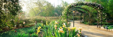 Irises & Rosarium Trellises