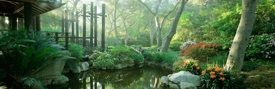 Japanese Garden With Azaleas & Clivias