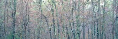 Aqua Trees