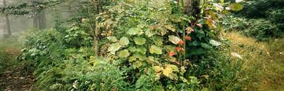 Fog Foliage