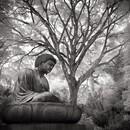 Buddha, Foster Botanical Garden, O'ahu