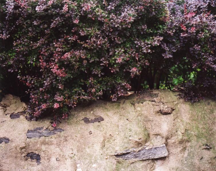 Untitled (Van Cortlandt Park)