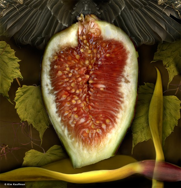 Investigation: Fig