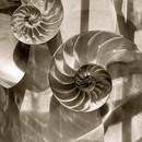 Nautilus Shells 1