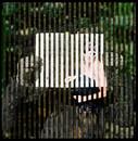 The Weeken #9, (2009)