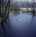 Swamp 1 - 2008