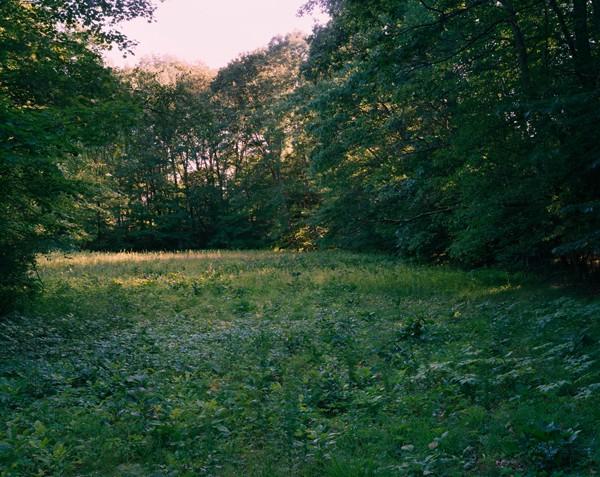 A Meadow Near Cushman Brook