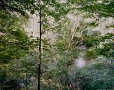 Cushman Brook [view #7]