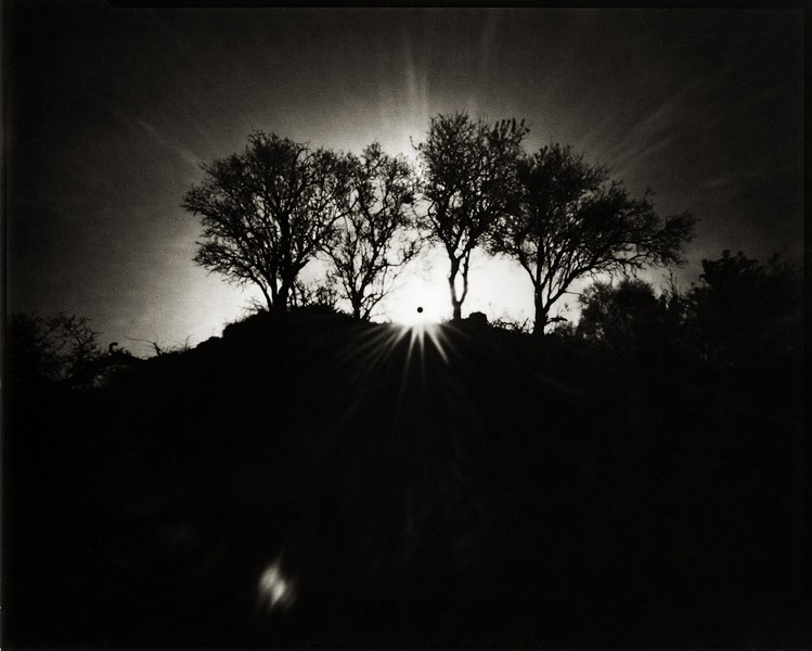 The Trees Behind The Black Sun, Cyprus, 2012