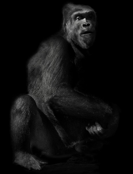 Animal (6), 2007.