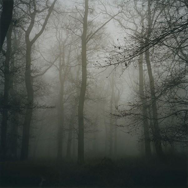 Commonhill Wood No5